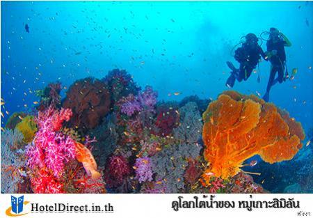 ที่จัดกิจกรรม  ดูโลกใต้น้ำของ หมู่เกาะสิมิลัน